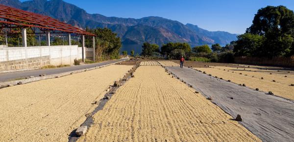 Wereld-van-koffie-blog