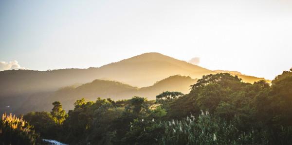 Jamaica-Blue-Mountain-BLOG
